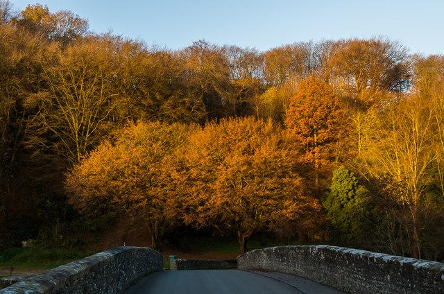 Autumn colours on Whitcliffe