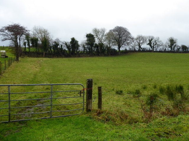 Mountjoy Forest West Division