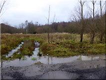 H4277 : Wetland, Tattraconnaghty by Kenneth  Allen