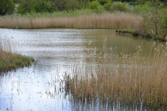 A pool in the Leam Valley Local Nature Reserve, Newbold Comyn Park, Leamington