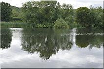SU8484 : River Thames by N Chadwick