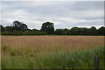 SU8484 : Meadow by the River Thames by N Chadwick