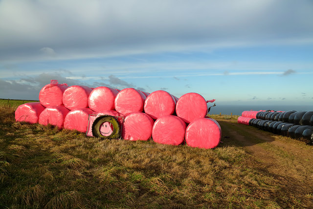 Wrapped bales at Meikle Black Law