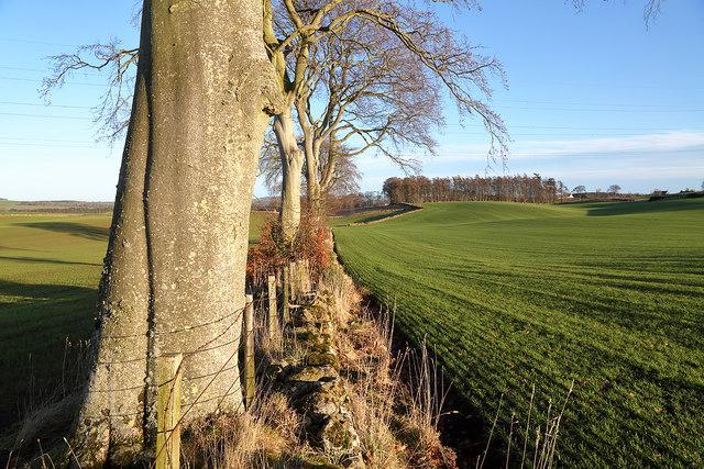 Winter farmland near Ladywell