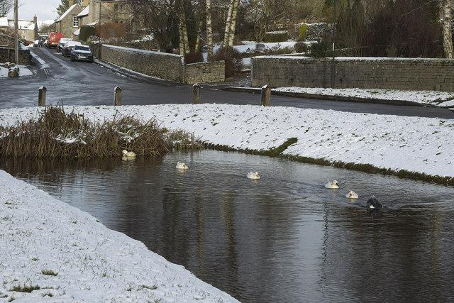 Hartington Pond - ducks in the snow