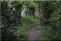 SX4951 : South West Coastal Path by N Chadwick