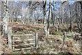 NH4744 : Woodland, Torgormack by Richard Webb