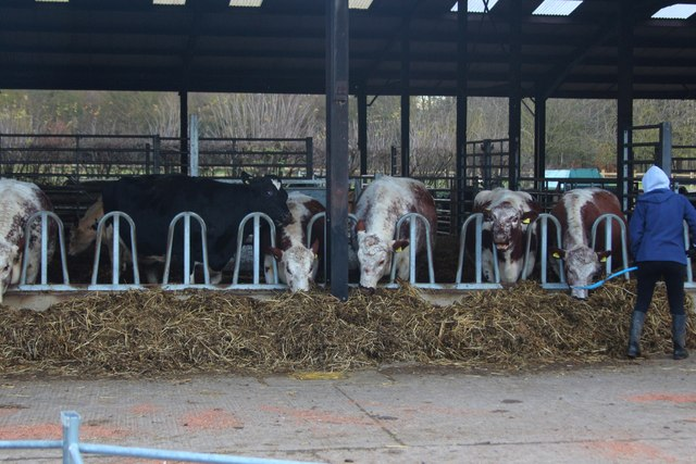 Cow barn, Wimpole Hall Farm