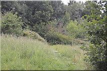 TQ3328 : Footpath, Ardingly Reservoir by N Chadwick