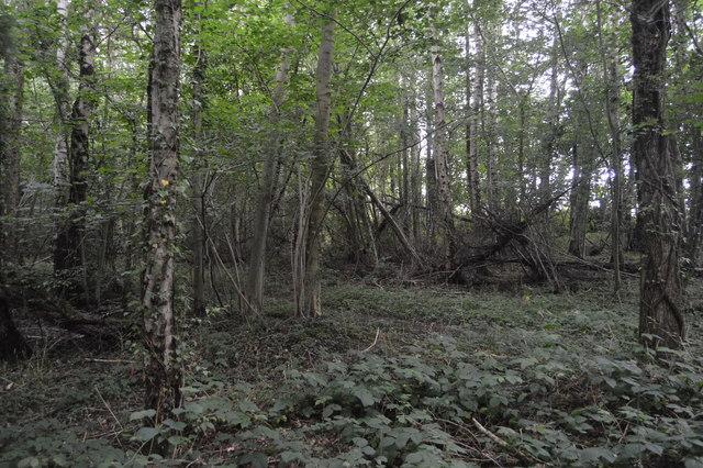 Bridleshaw Wood