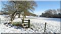 SJ7859 : Field path E of Deanhill Farm near Hassall Green by Colin Park