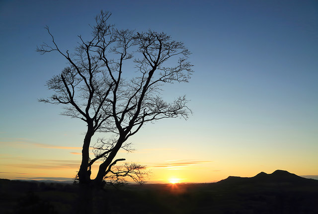 A winter tree at Scott's View