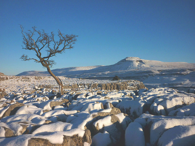 Hawthorn and snow, Twisleton Scar End