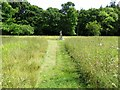 SZ5294 : The wildflower meadow behind the Swiss Cottage by Steve Daniels