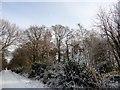 NZ1649 : Beech wood in the snow by Robert Graham