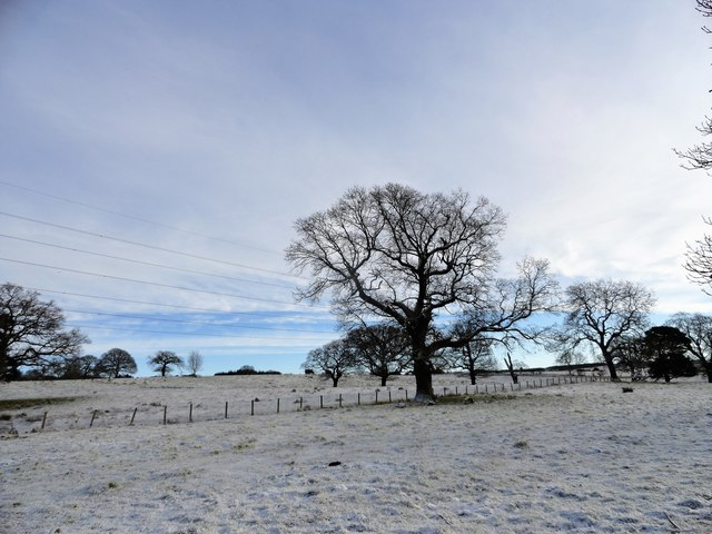 Field trees in a snowy landscape