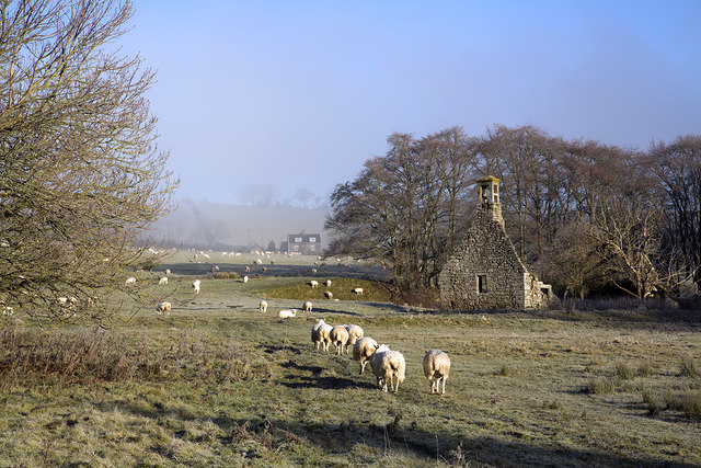 Sheep at Abbotrule