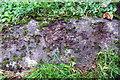 SP4235 : Benchmark on culvert beside Tadmarton Road by Roger Templeman