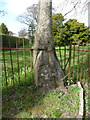 NS3317 : Railings embedded in a tree, Alloway by Humphrey Bolton