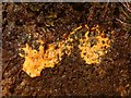 NS4179 : Yellow slime on soil by Lairich Rig