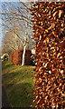 SX8966 : Beech hedge, Nicholson Road, Torquay by Derek Harper