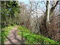NS3521 : Elms on the riverside path, Craigie Estate, Ayr by Humphrey Bolton
