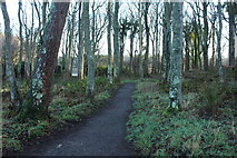 NS2209 : Woodland Path to the Swan Pond, Culzean by Billy McCrorie
