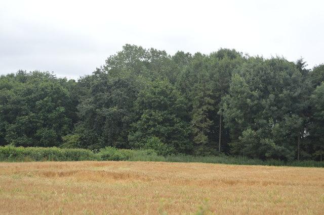Woodland by Borde Hill Lane