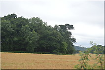 TQ3128 : Woodland edge by N Chadwick