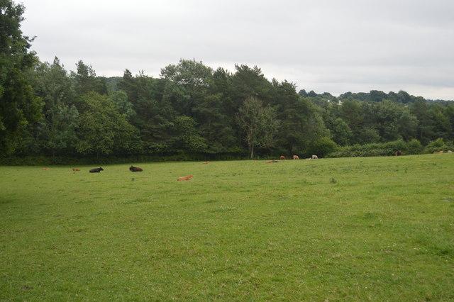 Cattle near Ardingly Reservoir
