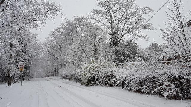 Snow in Trent Park
