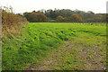 SY5091 : Field by Bredy Lane by Derek Harper