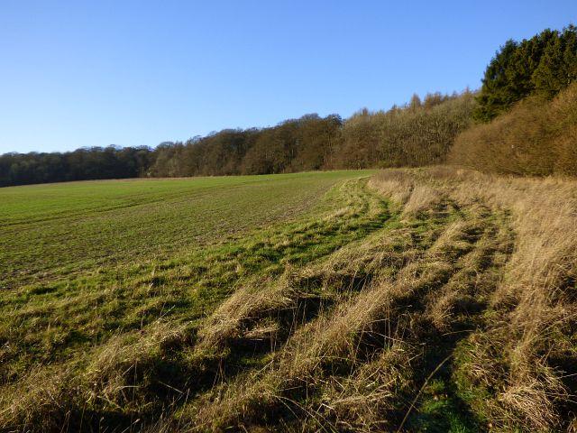 Farmland, Princes Risborough