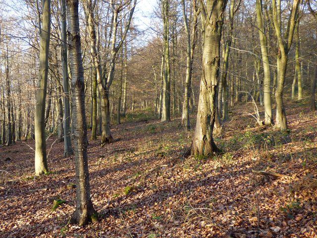 Woodland, Little Hampden