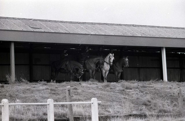 Police horses sheltering on the disused terrace at Springfield Park