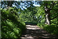 SX4552 : South West Coast Path, Mount Edgcumbe Country Park by N Chadwick