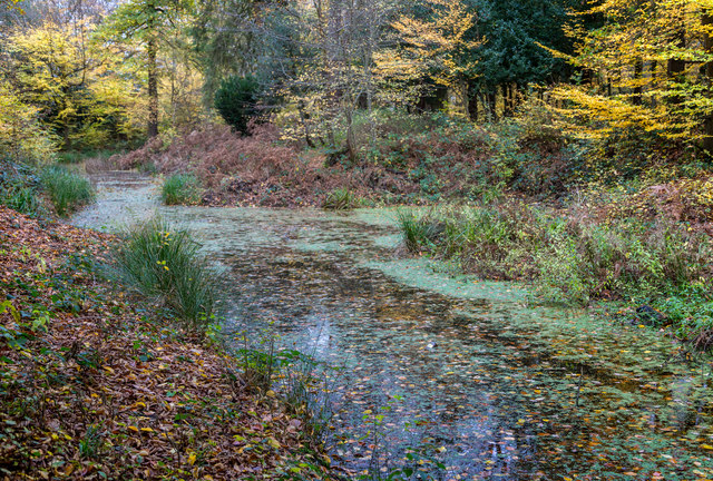Camlet Moat, Trent Park in Autumn