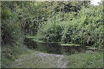 SU8607 : Ford, River Lavant by N Chadwick