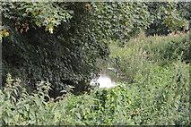 SU8607 : River Lavant by N Chadwick