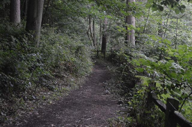 Footpath, Great Burrow Wood