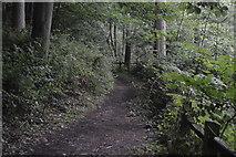TQ3230 : Footpath, Great Burrow Wood by N Chadwick