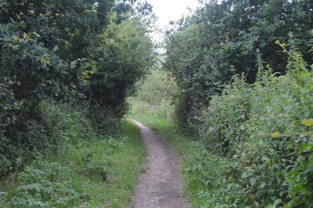 Footpath by Ardingly Reservoir