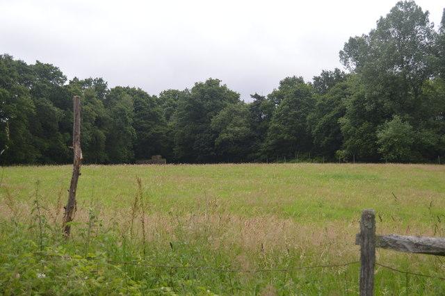 Field by Ardingly Reservoir
