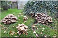 SO8742 : Fungi in Earl's Croome churchyard by Philip Halling