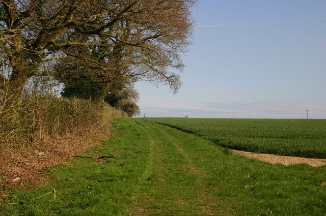 Path by hedge heading to Lower Bodham