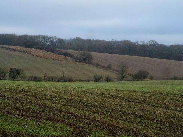 Winter wheat near Cumberlow Green Farm