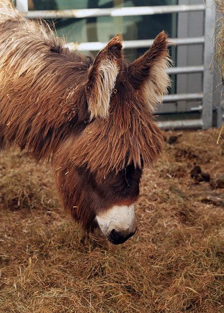 A donkey at Milestone Garden Centre
