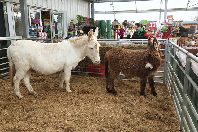 Donkeys at Milestone Garden Centre