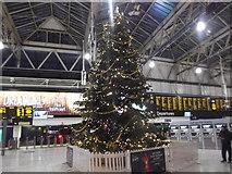 TQ3179 : Christmas tree, Waterloo Station by Robin Sones