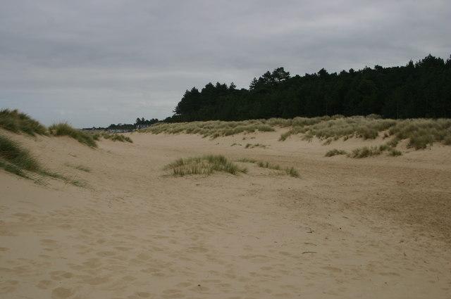 Amongst the Dunes